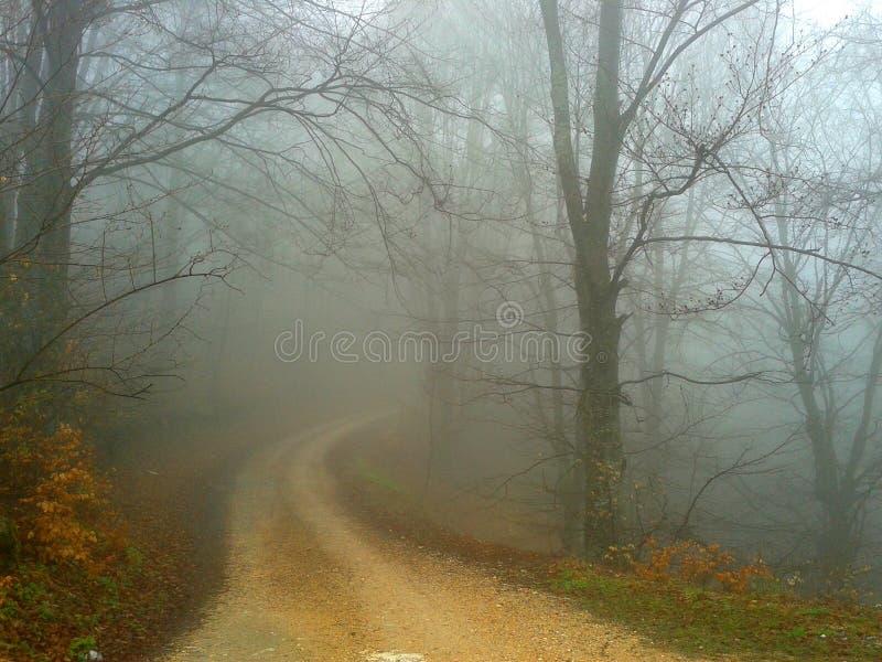 Natureza nevoenta foto de stock royalty free