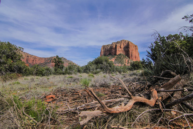 Natureza no Arizona foto de stock royalty free