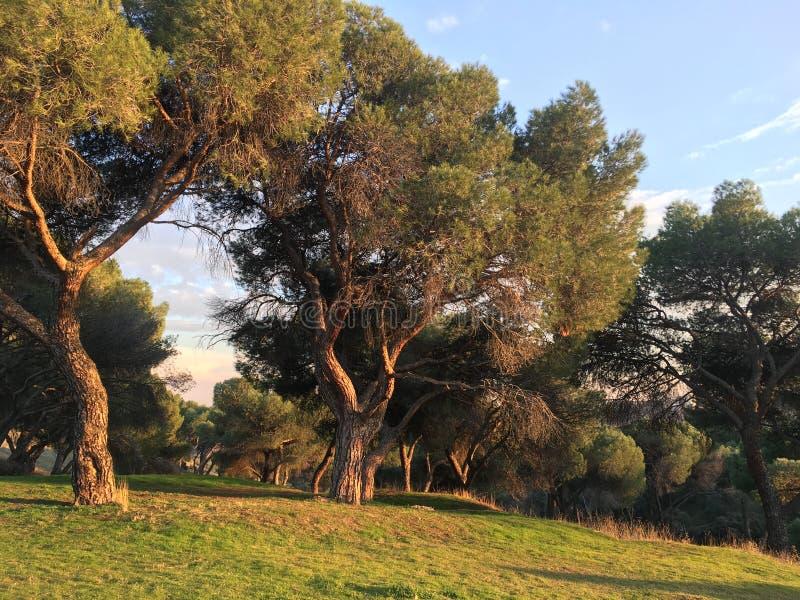 Natureza no Madri imagem de stock royalty free