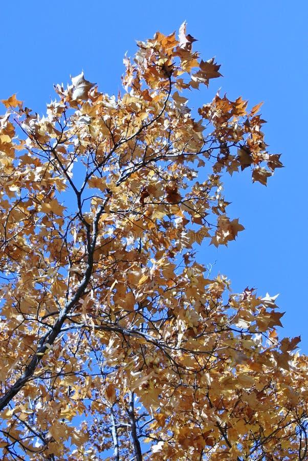 Natureza no outono, território de Altai, Sibéria ocidental, Rússia imagens de stock