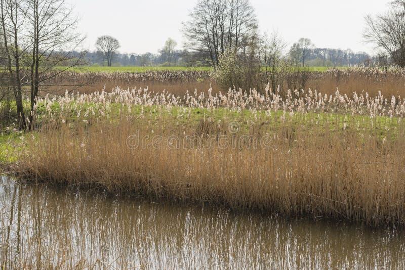 Natureza nova no Achterhoek fotografia de stock royalty free