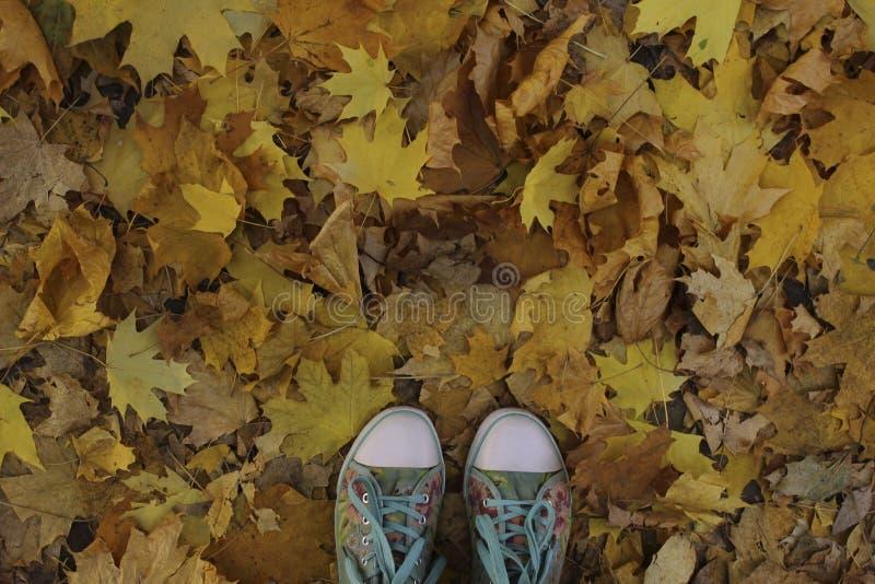 Natureza, parques, conceito exterior Tiro colhido das sapatilhas azuis sobre Autumn Background imagem de stock royalty free