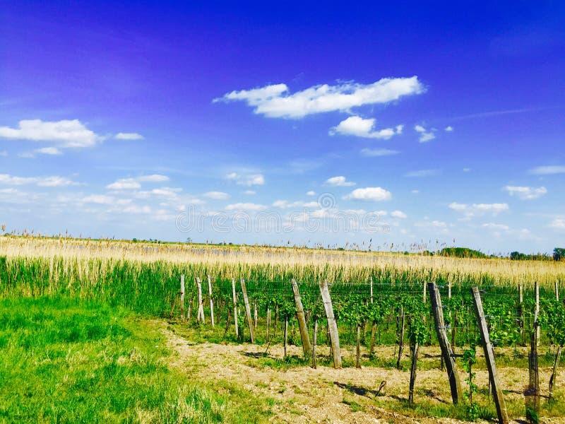 A natureza perto de Neusiedl considera foto de stock