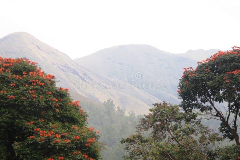 Natureza que esconde atrás das árvores imagens de stock royalty free