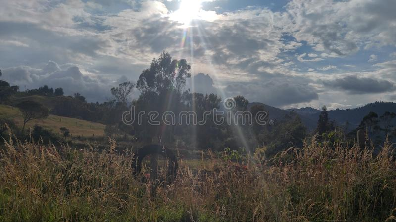A natureza selvagem de Bogotá, Colômbia imagem de stock royalty free