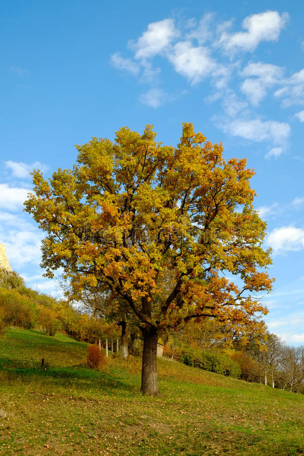 Natureza simples imagem de stock royalty free