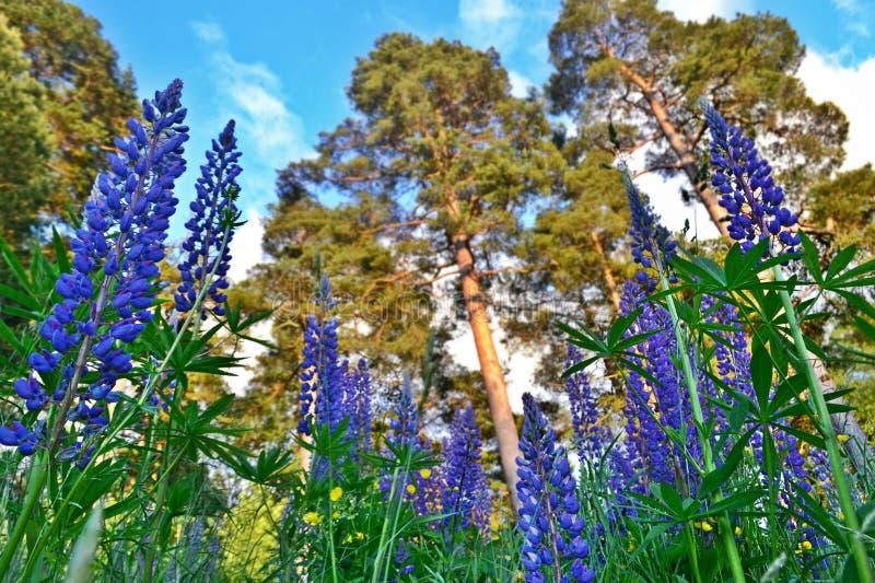 Natureza sueco imagens de stock