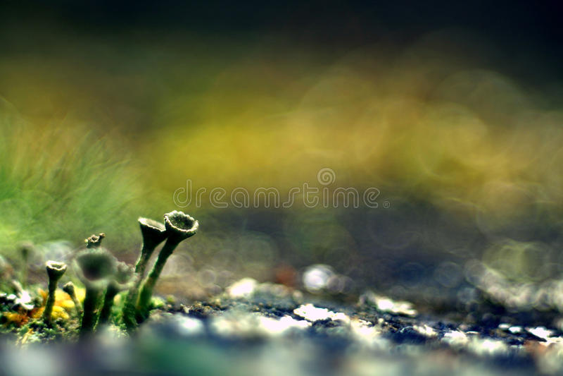 Natureza verde do macro do microcosmo do musgo fotos de stock