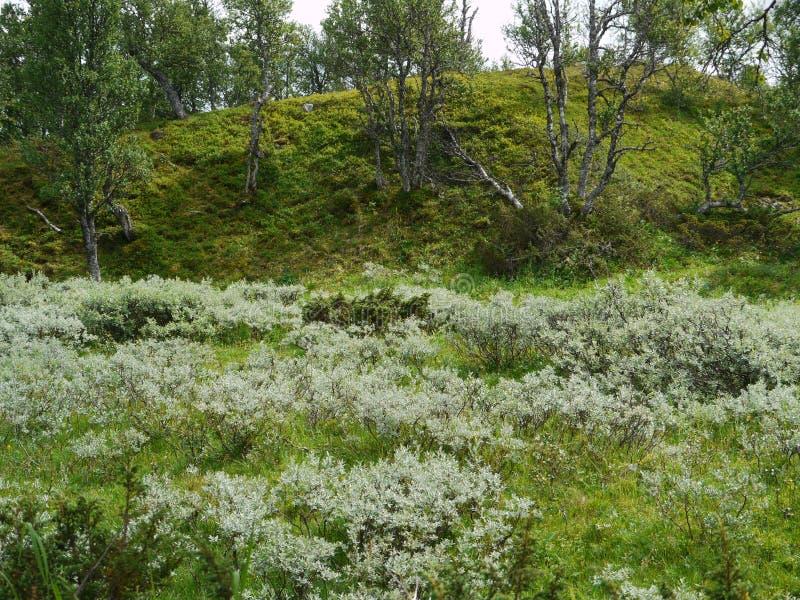 Natureza verde nas montanhas de Dalarna norte, Suécia imagem de stock royalty free