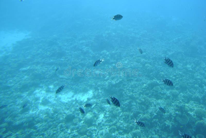 Natureza, vida, água, peixe, bonito, nadada fotografia de stock