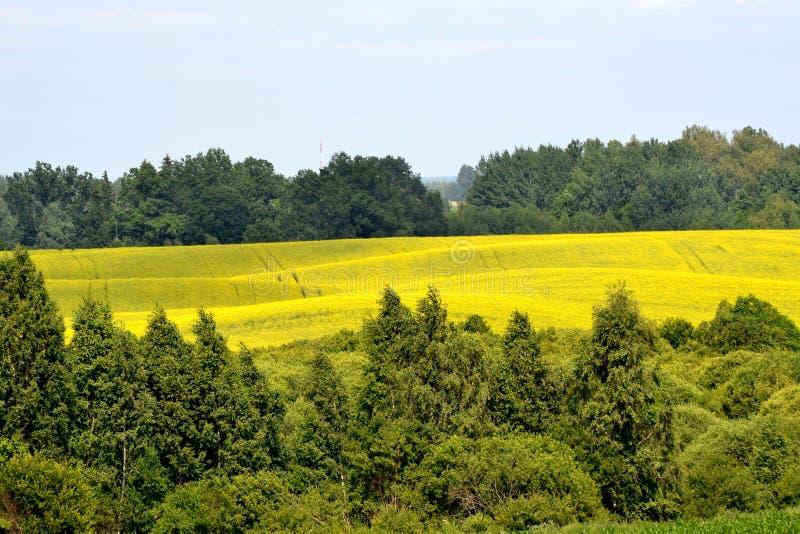 Naturfeldwald stockbild