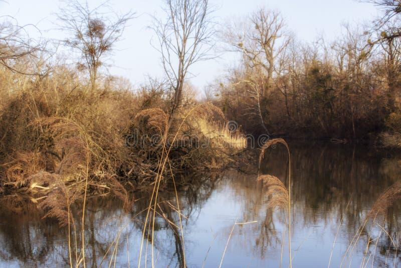 Naturfoto från Szigetköz i Ungern royaltyfri fotografi
