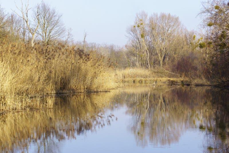 Naturfoto från Szigetköz i Ungern arkivfoton