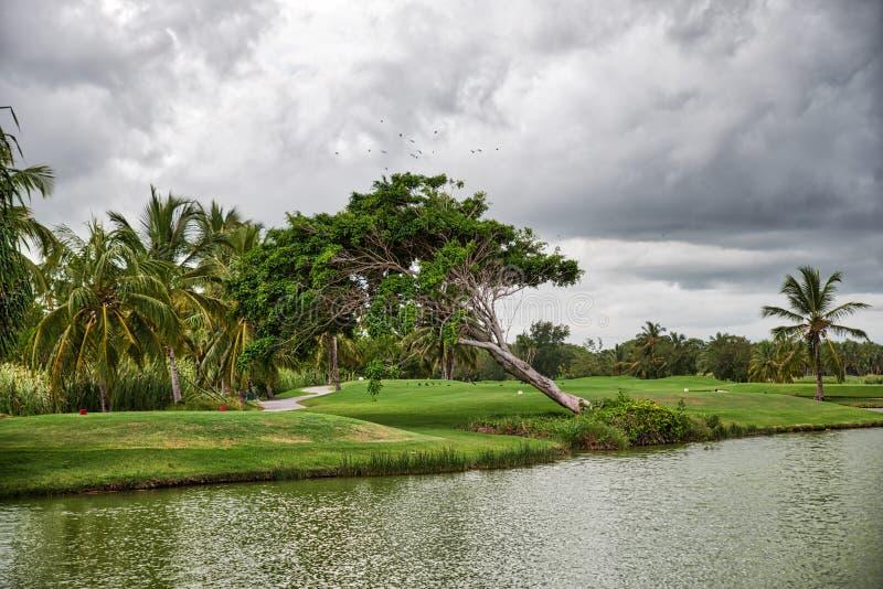 Naturfotografi som kopplar av i Dominikanska republiken venezuela fotografering för bildbyråer