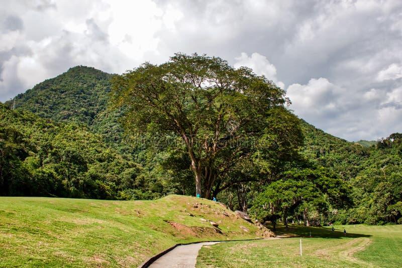 Naturfotografi som kopplar av i Venezuela royaltyfri bild