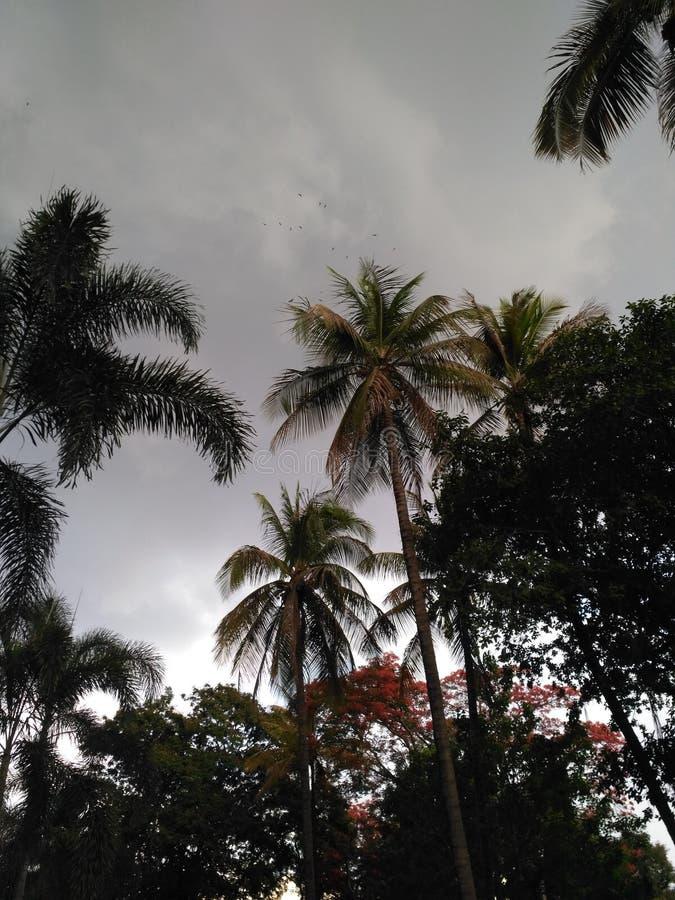 Naturfotografie PUNE, MAHARASHTRA INDIEN lizenzfreies stockfoto