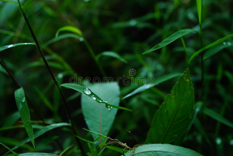 Naturfressgräs arkivfoto