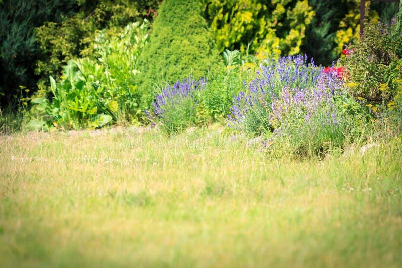 Download Naturgartenhintergrund stockfoto. Bild von blumen, blüte - 96930408