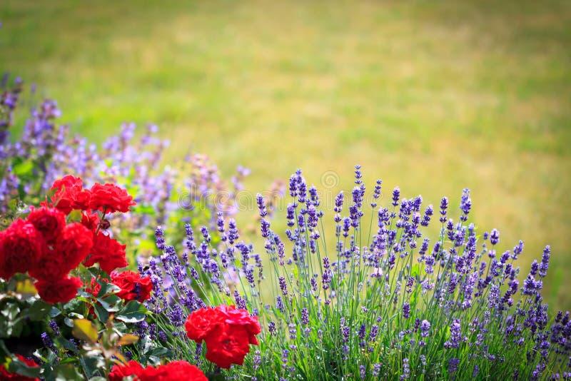 Download Naturgartenhintergrund stockbild. Bild von gardening - 96930501