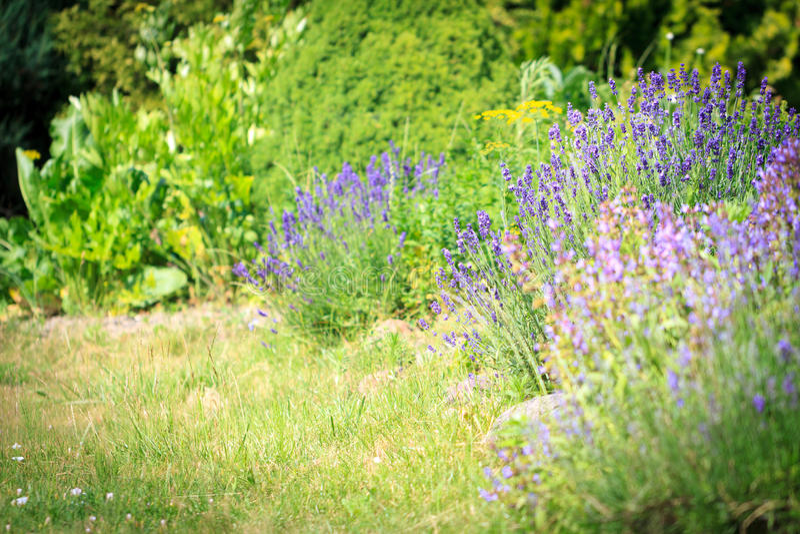 Download Naturgartenhintergrund stockfoto. Bild von blühen, duftstoff - 96930604