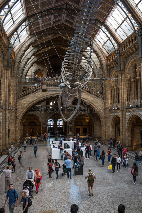 Naturgeschichte-Museum in London lizenzfreies stockbild