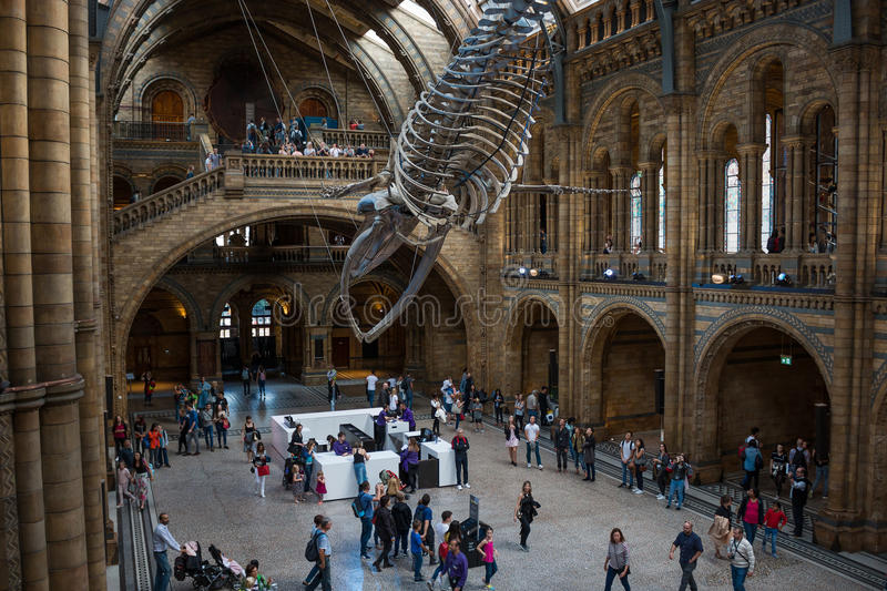 Naturgeschichte-Museum in London stockbilder