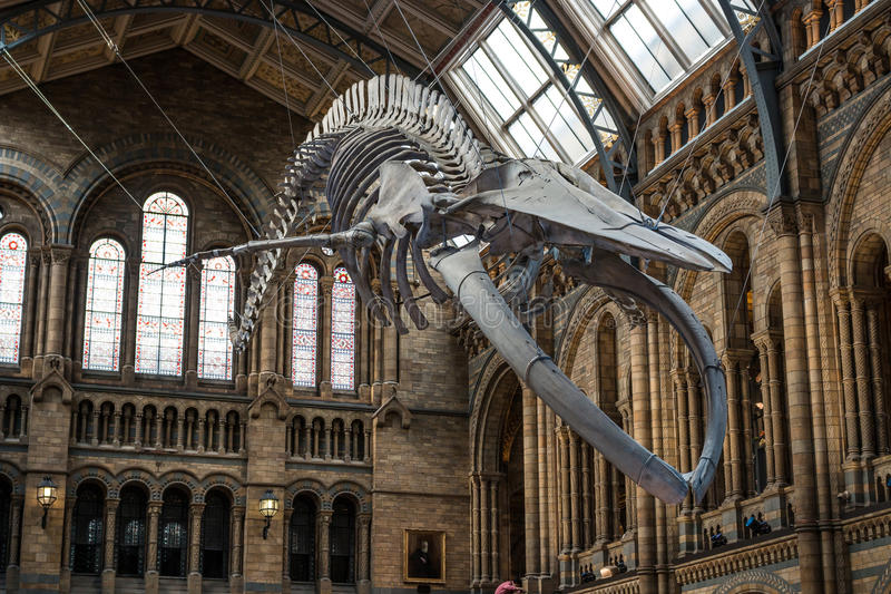 Naturgeschichte-Museum in London stockfotos