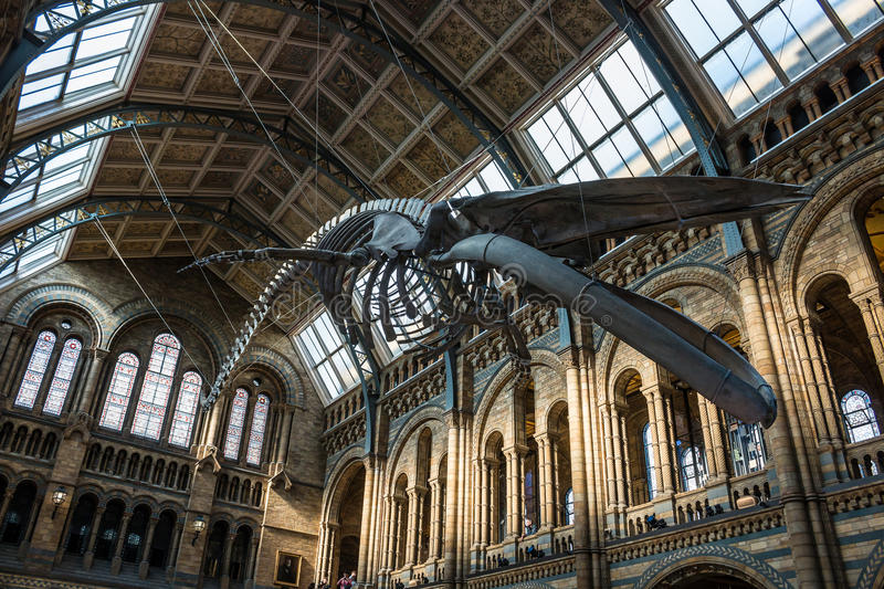 Naturgeschichte-Museum in London lizenzfreie stockfotografie