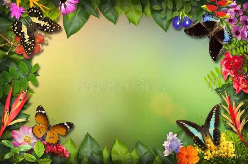 Naturgräns med blomman och fjärilen arkivfoto