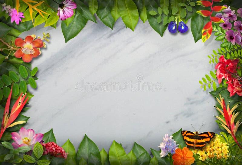 Naturgräns med blomman och gräsplanbladet arkivfoto