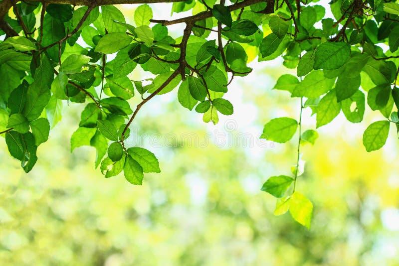 Naturgräsplan arkivfoton