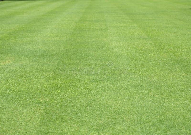 Naturgrönt gräs i trädgården, bakgrunden till det historiska mönstret arkivbilder
