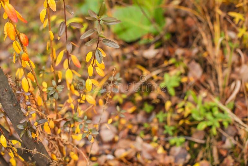 Naturhöstbakgrund med guld- lövverk i grunt djup av fältet arkivfoton