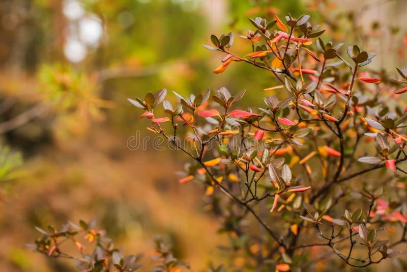 Naturhöstbakgrund med guld- lövverk i grunt djup av fältet arkivbild