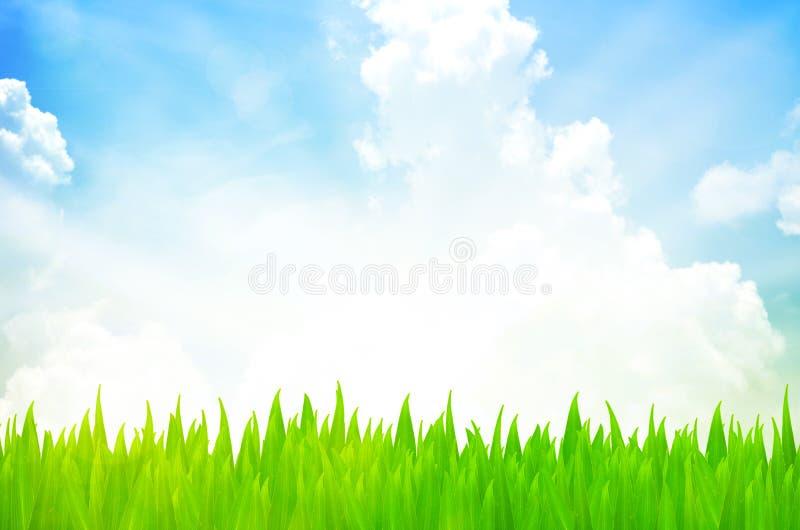 Naturhintergrund mit Gras und blauem Himmel stockbilder
