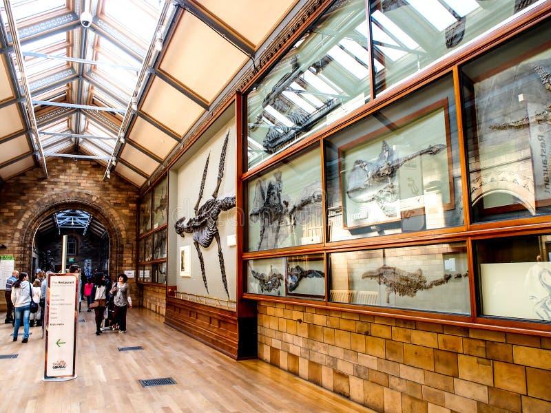 Naturhistoriamuseet, London, UK royaltyfria foton