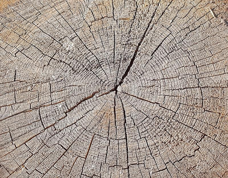 Naturholzbeschaffenheit des Baumstumpfs Weinlesehintergrund mit Sprüngen Nahtloser Beschaffenheitsabschluß oben Hölzerne Beschaff lizenzfreie stockbilder