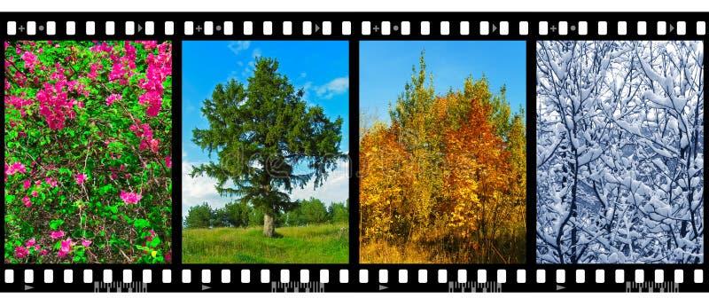 Naturjahreszeiten in den Filmfeldern (meine Fotos) stockbild
