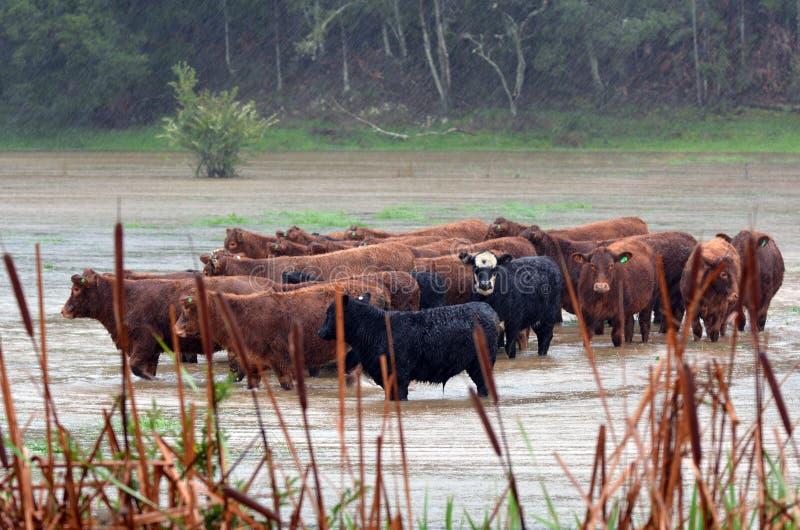 Naturkatastrof - flod fotografering för bildbyråer