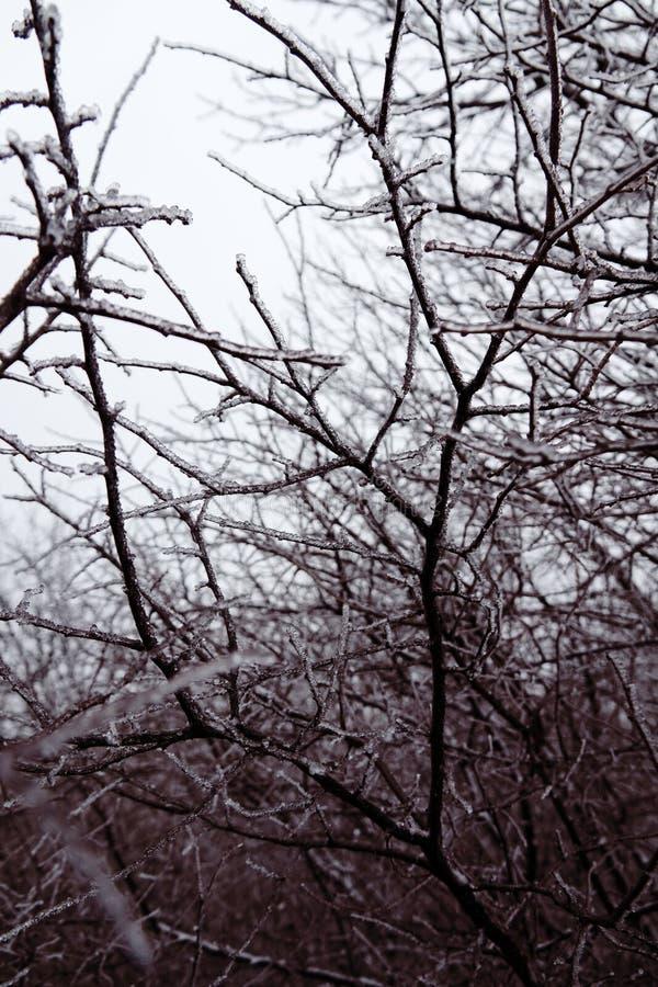 Naturkatastrofen i form av isregn kom till den sydliga regionen royaltyfria foton