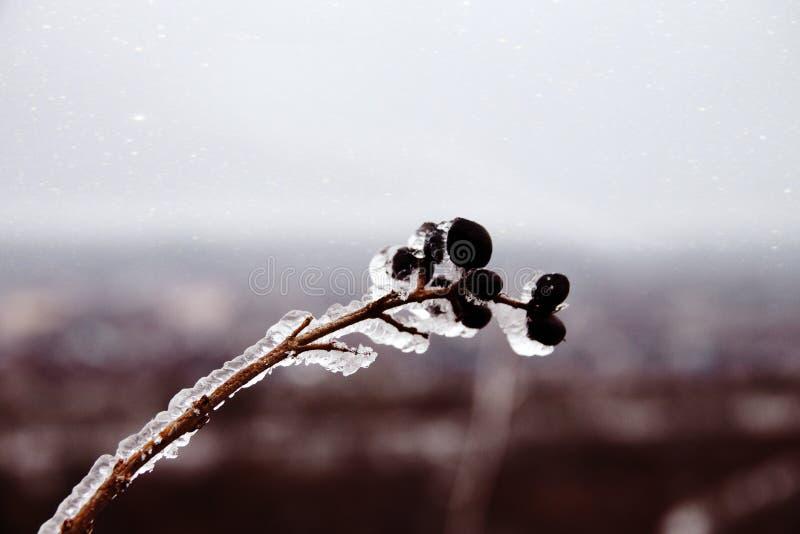 Naturkatastrofen i form av isregn kom till den sydliga regionen royaltyfri foto
