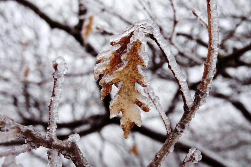 Naturkatastrofen i form av isregn kom till den sydliga regionen royaltyfri bild