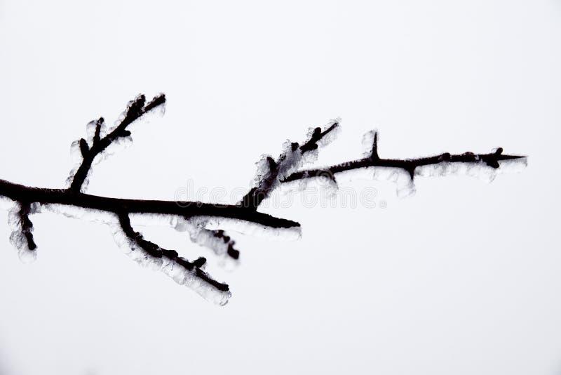 Naturkatastrofen i form av isregn kom till den sydliga regionen royaltyfri fotografi