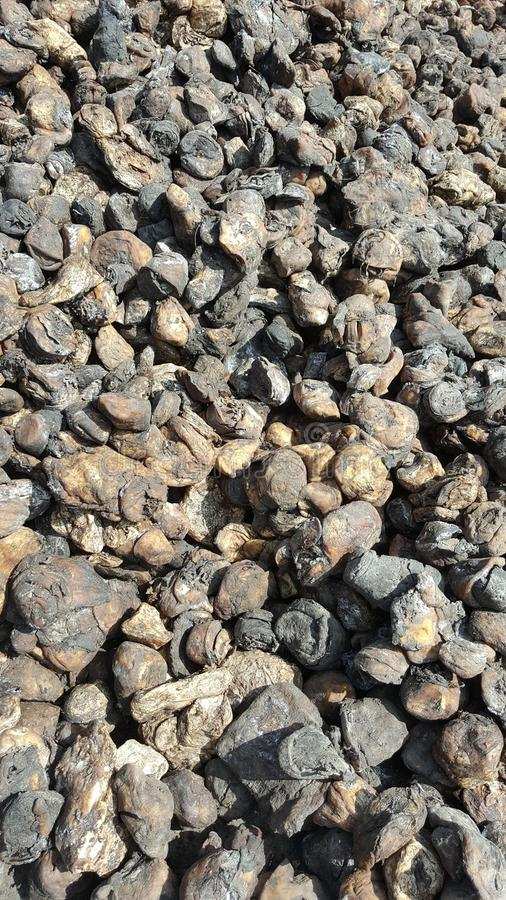 Naturkautschuk-Schalen-Klumpen stockfoto