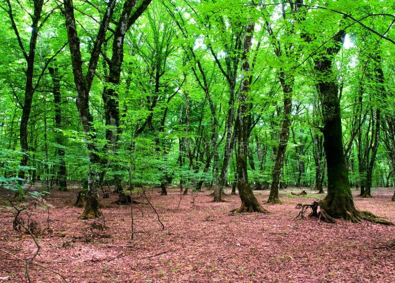 Naturkonzept - grüner Wald lizenzfreies stockfoto