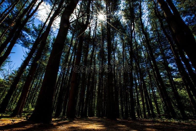 Naturlandschaft mit Bäumen im Wald stockfoto