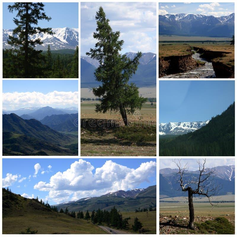 Naturlandschaftscollage lizenzfreies stockbild