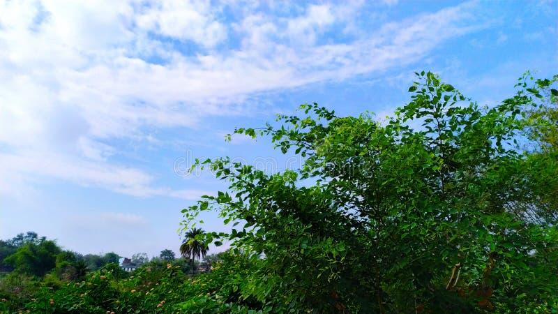 Naturlandschaftsklicken vom Telefon stockbild