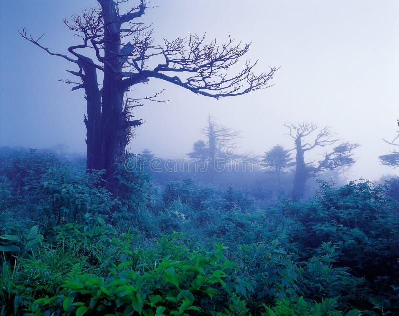 naturlandskap royaltyfri bild