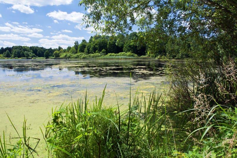 Naturlandskap - sjö med gröna träd och växter Landskap royaltyfria bilder